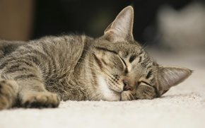Picture cat, stay, sleep