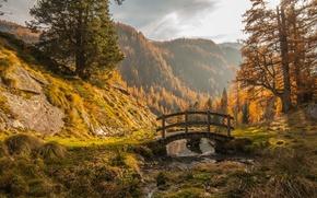 Picture autumn, forest, mountains, nature, the bridge