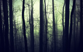Picture forest, nature, fog, darkness