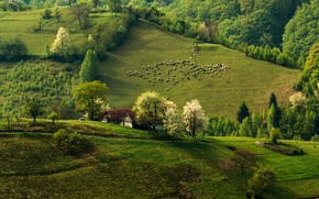 Picture forest, nature, hills, sheep, home, spring, morning, flock