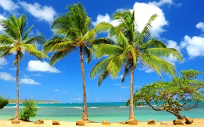 Picture sea, stones, palm trees, tree, the ocean, crooked