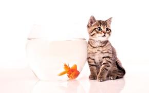 Picture kitty, aquarium, fish