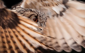 Picture owl, bird, wings, feathers, tail