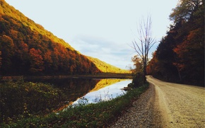 Wallpaper lake, pond, road, trees, gold, autumn