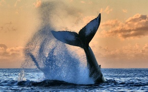 Picture ocean, water, whale