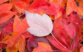 Wallpaper foliage, autumn, sheet, macro