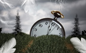 Picture grass, time, style, watch, feathers, installation