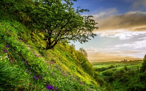 Picture greens, summer, grass, flowers, field, slope, hill, the bushes