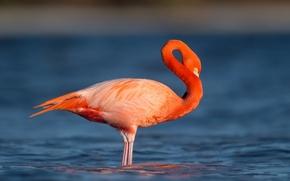 Picture water, eye, wildlife, flamingo