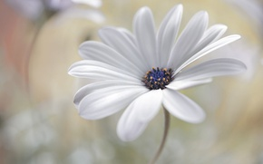 Picture flower, nature, petals, stem