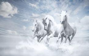 Picture Wallpaper, White Horse, White Horses