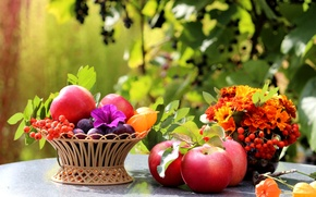 Picture flowers, table, leaves, still life, fruit, Rowan, basket, apples, plum