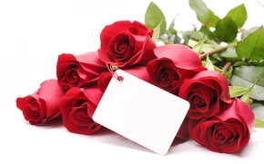 Picture flowers, roses, valentine's day, red roses