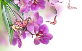 Picture sheet, petals, butterfly, nature, Orchid, flower