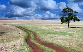 Picture road, field, the sky, tree