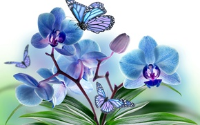 Picture flowers, collage, butterfly, wings, petals, Orchid