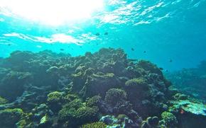 Picture fish, the ocean, corals, underwater world