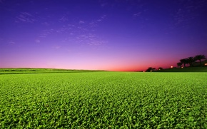 Picture greens, field, the sky, sunset
