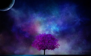 Picture space, night, tree