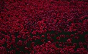 Picture Maki, red, a lot