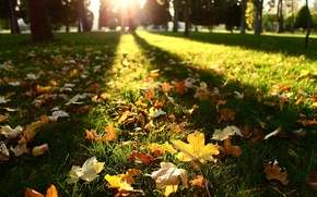 Picture autumn, leaves, the sun