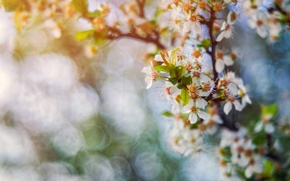 Picture nature, spring, garden