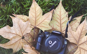 Picture leaves, camera, the camera, cover, maple, canon