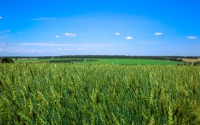 Picture field, summer, the sky, Russia