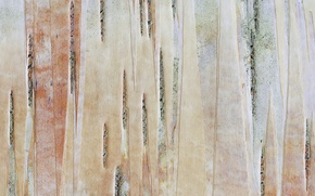 Wallpaper color, bark, trunk, tree