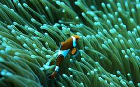 Wallpaper sea, fish, reef