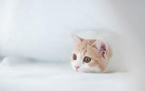 Picture kitty, © Ben Torode, Hannah