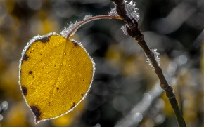 Picture frost, autumn, sheet, branch, crystals