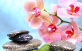 Picture flowers, droplets, Orchid, leaves, Spa stones