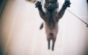 Picture eyes, cat, jump, paws, bokeh