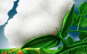 Wallpaper Cotton, fluff, plants