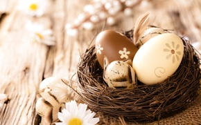 Picture eggs, flowers, camomile, Easter, eggs, chamomile, wood, easter
