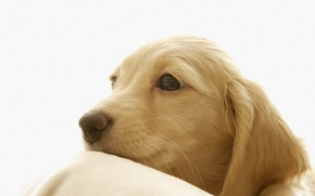 Picture tenderness, beauty, dog