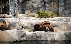 Wallpaper bear, water, zoo, resting, sleeping, plant, stones