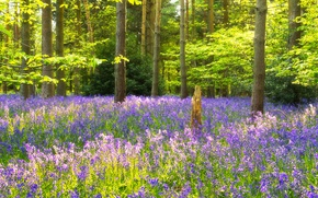 Picture forest, grass, trees, flowers, the edge