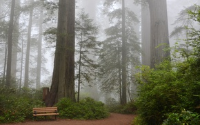 Picture forest, trees, bench, fog, Park, CA, track, USA, the bushes