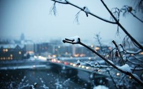 Picture snow, the city, Winter, branch