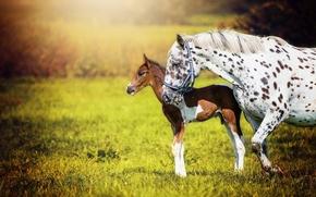 Wallpaper horses, background, nature