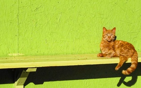 Picture cat, look, bench