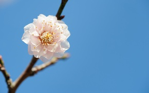 Picture flower, the sky, tree, branch, spring