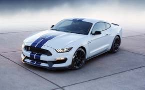 Picture Shelby, 350, 2015