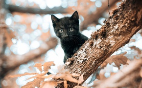 Picture cat, look, leaves, kitty, tree, black, small, muzzle