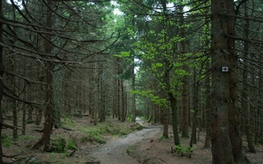 Picture forest, Nature, trail, forest, nature, path