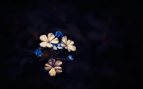 Picture background, flowers, Little Bloom
