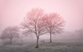 Wallpaper fog, Park, landscape