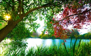 Picture trees, lake, beauty